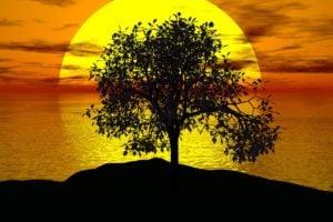 tree. tolérance