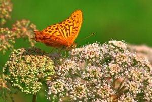 butterfly, changer