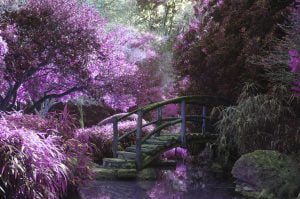 bridge, jardin