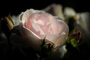 pink,peur