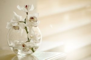 orchidées,harmonie