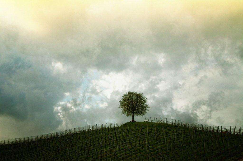tree,atteindre,bonte