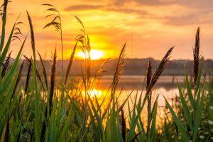 Sunrise,exprime,joie