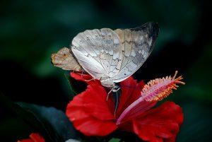 butterfly,depose,regard