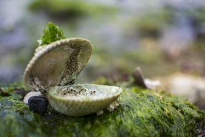 clam, chaque,instant,vie