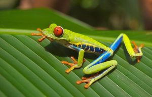 tree,frog,determination,patience