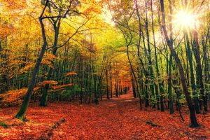 autumn,dialogue,interieur