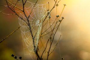 cobweb,souverain,soi