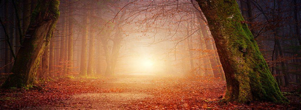Cheminement spirituel, chemin, paix, sérénité, nature,