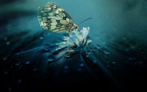nature, royaute, silence