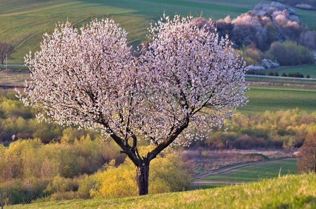 tree, arbre, monde, humain