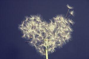 dandelion, liberer, peur