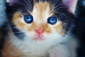 kitten, douceur