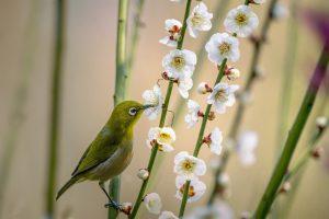 little-bird, generer, vie, bonheur