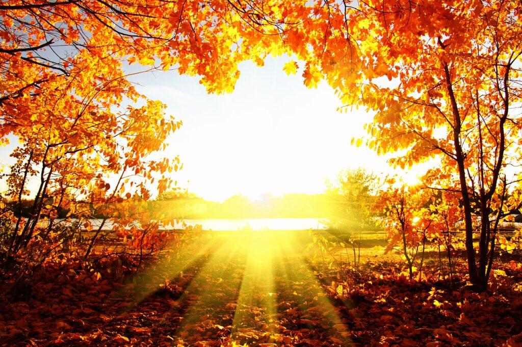 scène d'automne avec un soleil radieux
