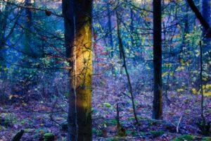Lumière sur un point précis dans la forêt