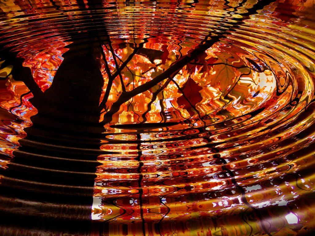 arbre d'automne surplombe des ronds dans l'eau